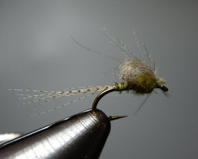 BWO_Emerger