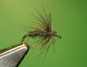 Starling Soft Hackle